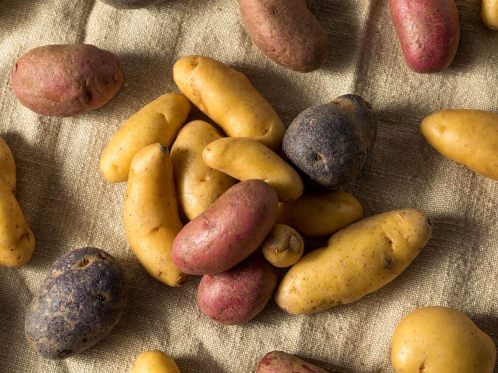 red purple yellow fingerling potatoes on table
