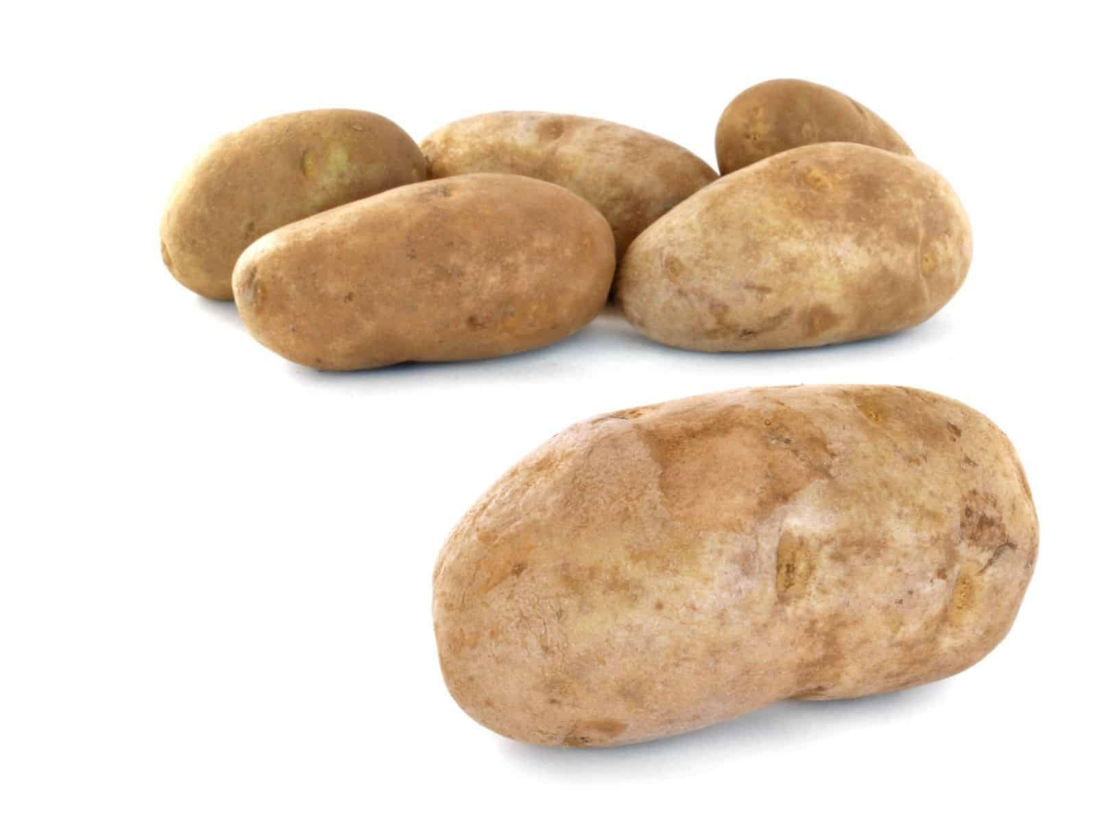 russet potatoes on a white background.